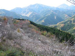 冬桜公園 029