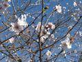 冬桜公園 019