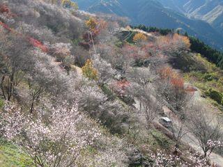 冬桜公園 033