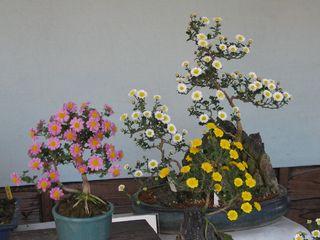 菊まつり2