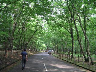 公園周回道路