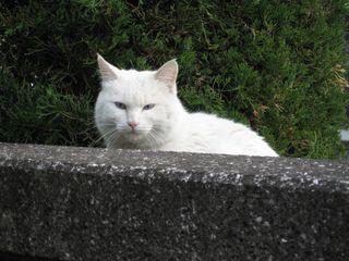 080202猫 001