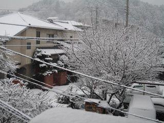 雪の朝 001