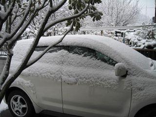 雪の朝 003
