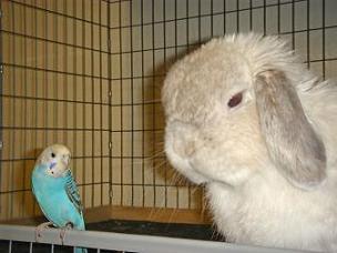 インコ&ウサギ1