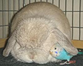 インコ&ウサギ2