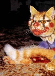 猫に化粧1