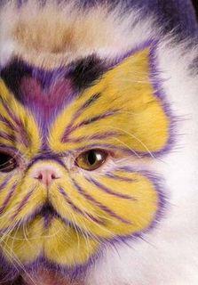 猫に化粧2