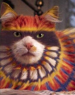 猫に化粧3