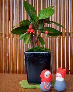 クリスマス盆栽2