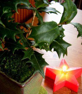 クリスマス盆栽4