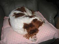 熟睡中のロンちゃん3