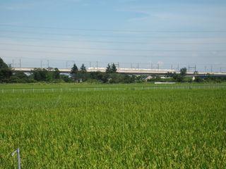 田園風景4